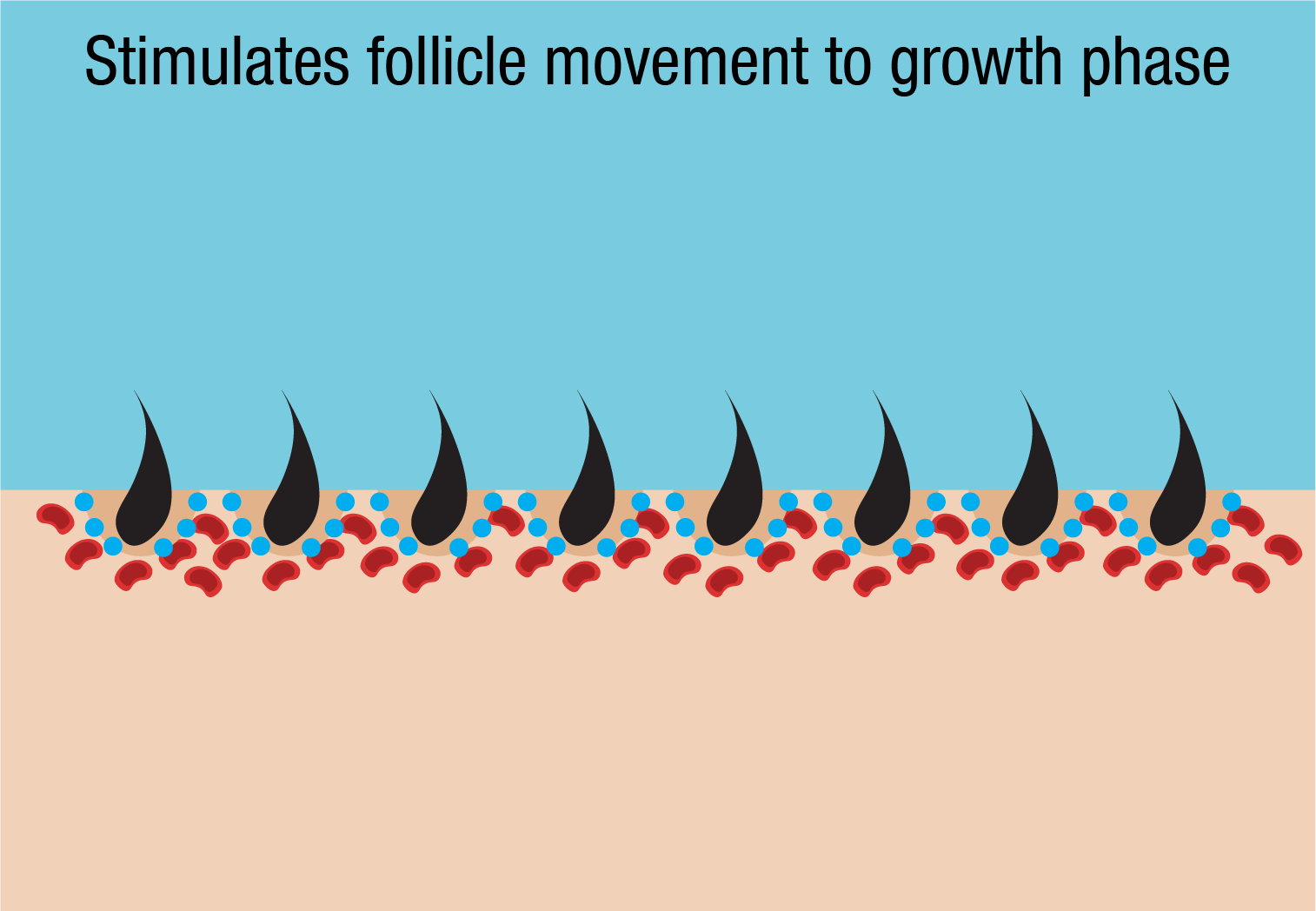 stimulate follicle movement to growth phase